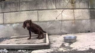 子犬が生まれていますよ http://www.woof.jp/ecs.html 2014年10月31日生...