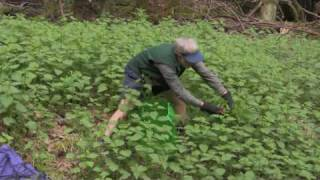 How to Eat Stinging Nettles, Green Temptations 2