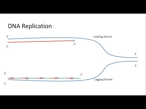 A Full Explanation About The Telomerase And The End Replication Problem