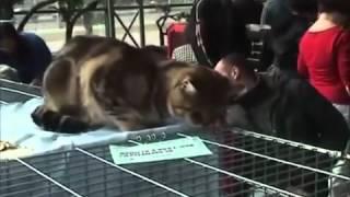 Международная выставка кошек.wmv.mp4