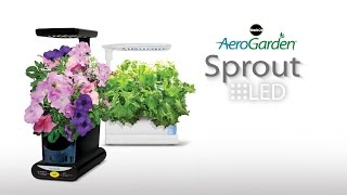 The Smart Countertop Garden - AeroGarden Sprout LED
