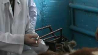 Подкожные и внутримышечные инъекции. Docent A.D. Stepanov, ПДАТУ