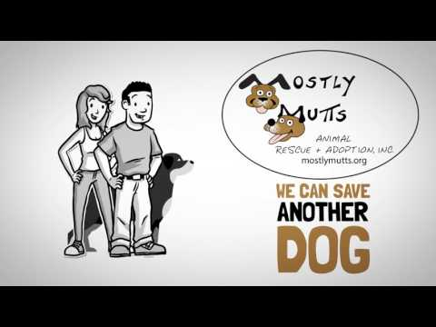 Mostly Mutts Animal Rescue