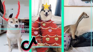 Time Warp Scan tiktok dog compilation (filter tiktok) part 4