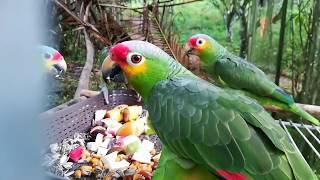 Свободу попугаям? Центр спасения птиц в Южной Америке.