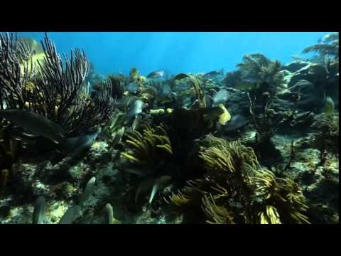 Lower Keys Underwater Music Festival (Video)