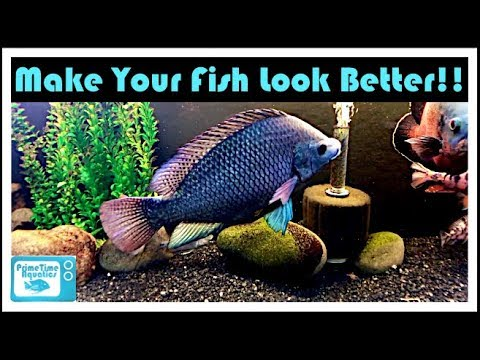 Fish Tank Background Show Down: Painted Tank Vs Store Bought Vs Clear Background!