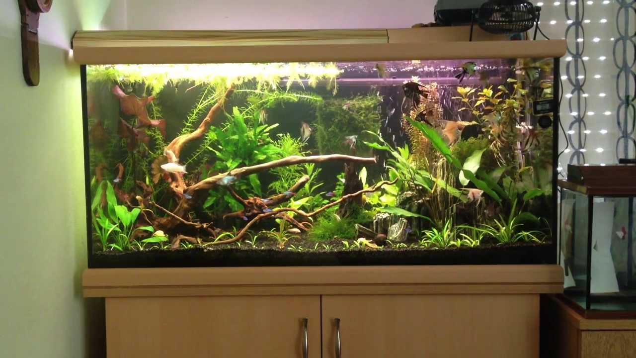 200 Liters Angelfish Tank  200 Litre Melek Akvaryumu