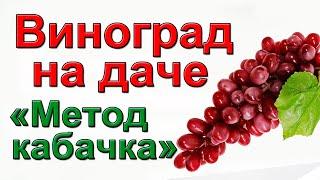 Полив и подкормка винограда БЫСТРО и НАДЁЖНО