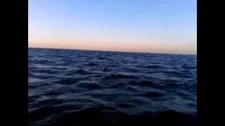 VLOG: Весела рибалка!!! Коли є клювання - нєфіг сидіти за компом!)))