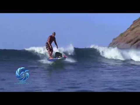 WAVE HOG starring KAMA THE SURFING PIG