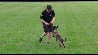 Dog Training: 5 Day Private Seminar! 15 Week Old Belgian Malinois, Fury! Part 1