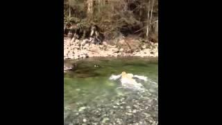 River Dog-lynn Canyon(north Vancouver) March 29-2013