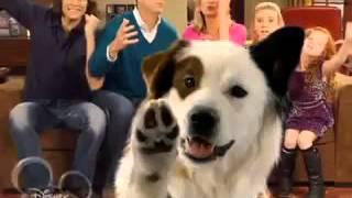 Собака точка ком   1 сезон, 6 серия