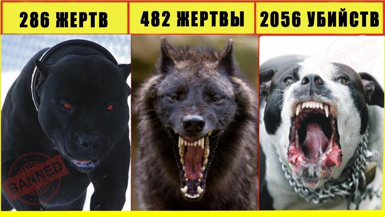 Эти Опасные Собаки Порвут Любого! Топ 10