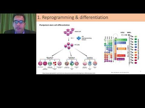Engineering stem cell biology for disease modelling and therapeutics