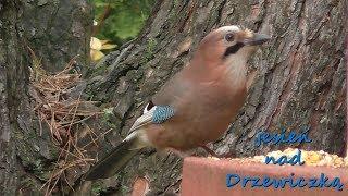 Ptaki nad Drzewiczką jesienią