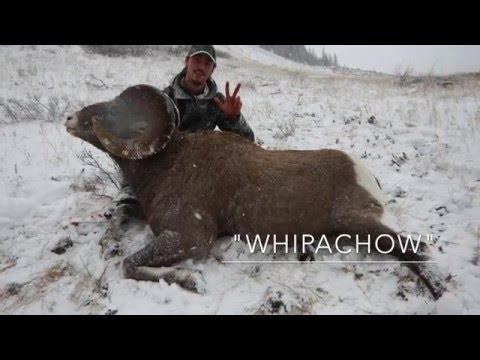2015 Rocky Mountain Bighorn Sheep Hunt