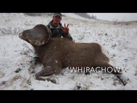 2015 Rocky Mountain Bighorn Sheep Hunt