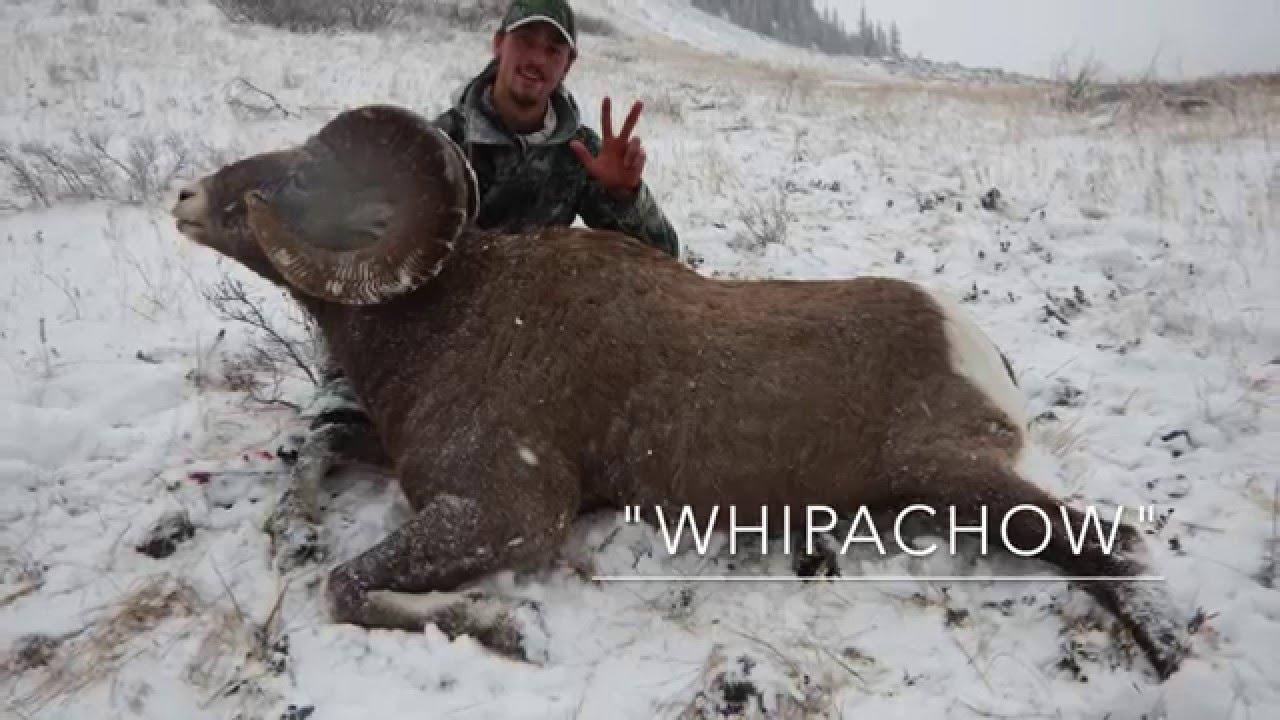 2015 Rocky Mountain Bighorn Sheep Hunt Youtube