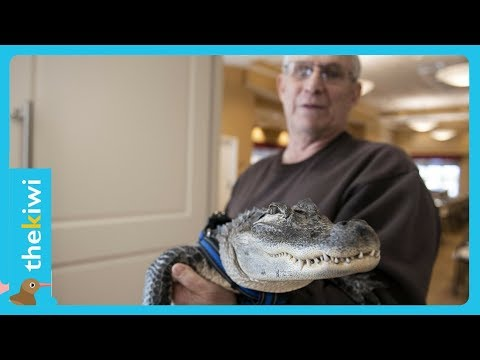 Emotional support alligator saves his owner's life