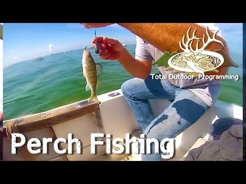 How to catch Perch on Lake Erie fishing with TOP