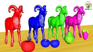 Learn Colors Animals for Children w Goat Eat Fruits COLOR Cartoon for Kids