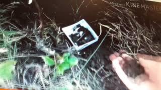 Похоронила живого хомяка!!😭   Перестановка клеток. Рисунки от подписчиков😚