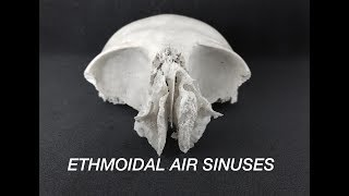 ETHMOIDAL AIR SINUSES