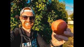 THE BEST OF CHILE: THE FRUIT! (APPLES!!!)   S.03 Ep.47