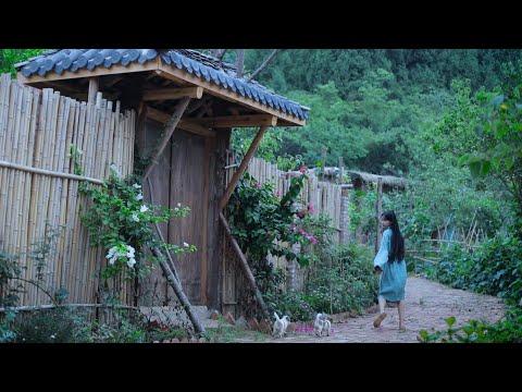 The life of cucumbers黄瓜的一生丨Liziqi Channel