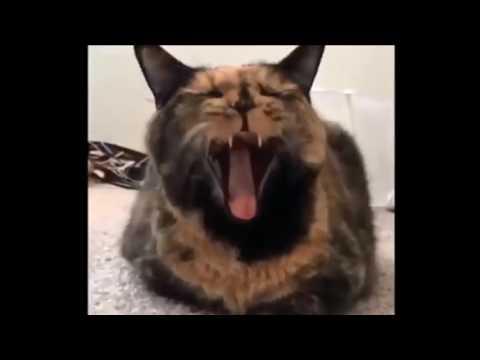 Приколы с кошками!Уморительные кошки и котята!Это надо видеть!