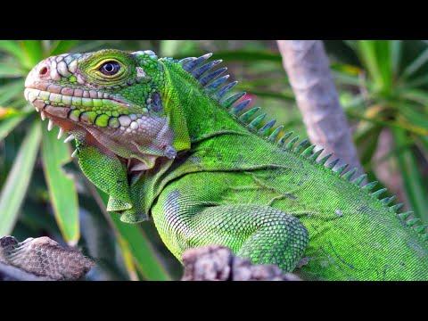 Рептилии - Знай ТВ смотреть онлайн в hd качестве - VIDEOOO