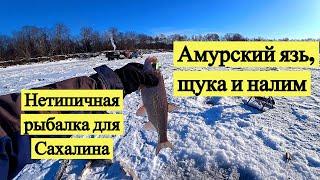 Амурский язь щука и налим Нетипичная рыбалка для Сахалина