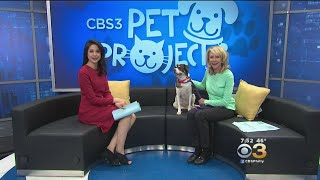 CBS 3 Pet Project: Raising Money For Special Needs Animals