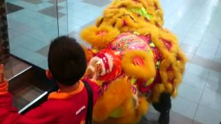 Labuan Lion Dance 2016- 5th day of Chinese New Year
