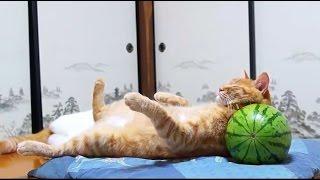 Смешные кошки и коты #3 - Необычные позы и места в которых спят кошки