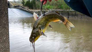 Using GIANT LIVE BAIT for Spillway MONSTERS!!! (Nonstop BIG Fish!)