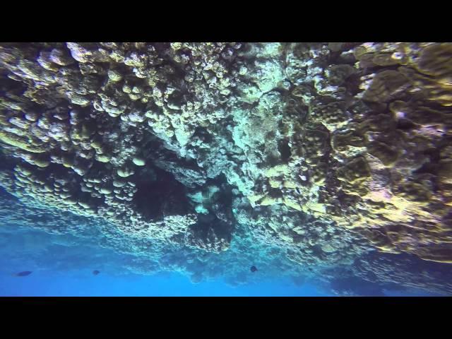Lionfish Spear Fishing Two Kills Aruba Jan 2015