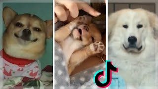 Cute & Funny Doggos To Make Your Day Better