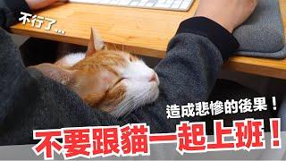 跟蛋捲上班很痛苦-跟貓工作造成悲慘的後果-好味貓日常-ep59