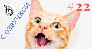 Самые Смешные Коты и Кошки 2017 Топовая Подборка. Лучшие Приколы с котами 2017 #22