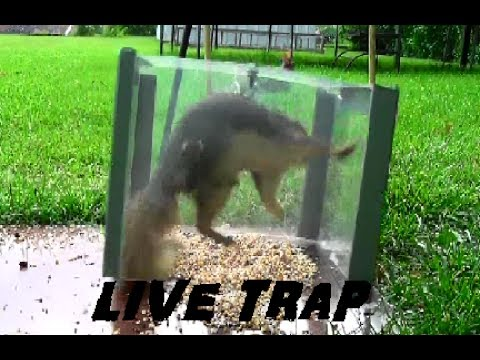 How To - Simple Live Trap for Small Animals