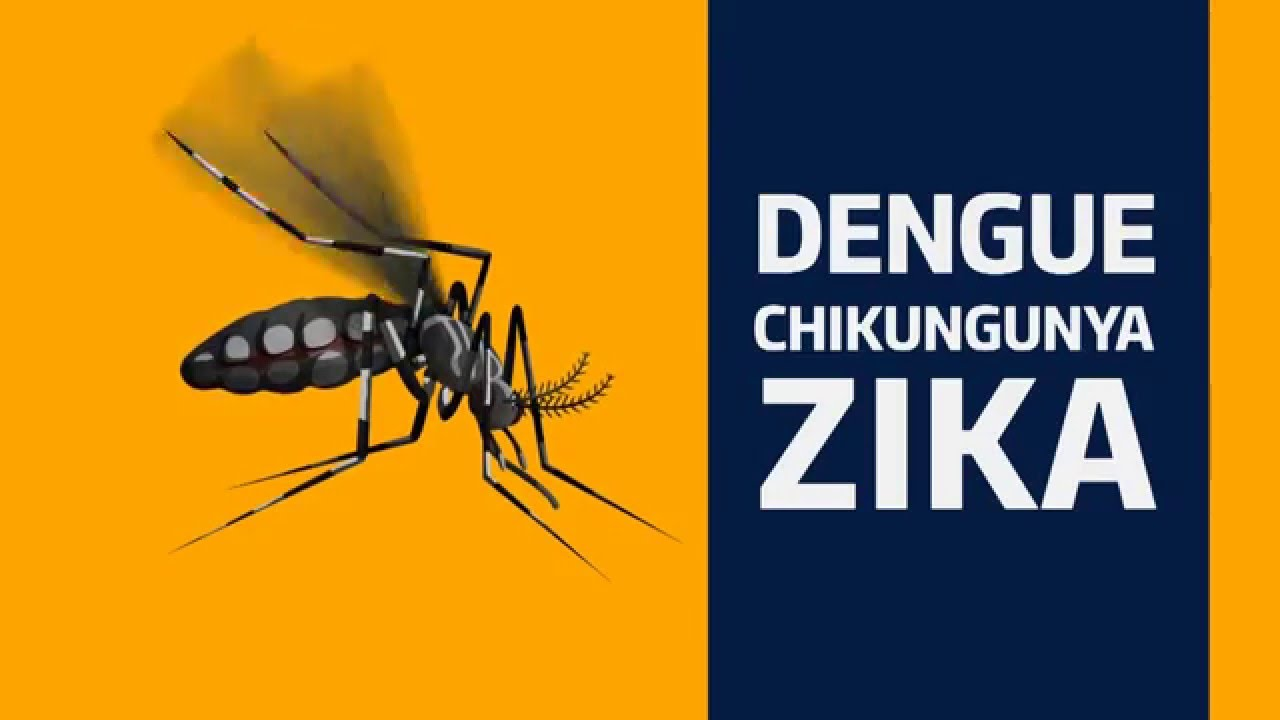 Image result for aedes aegypti