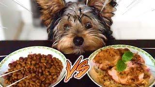 CROQUETTES vs FAIT MAISON CHALLENGE ! Dog food VS Homemade Challenge