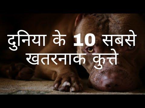 दुनिया के 10 सबसे खतरनाक कुत्ते The 10 Most Dangerous Dogs in the World