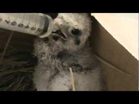 ba bird!!!!  I found this ba bird in my yard What kind is it?