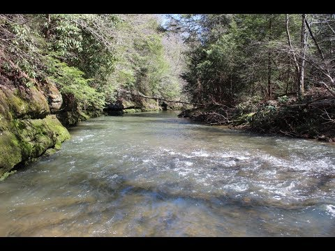 Waterfront Land In Tennessee | TFD-TR4