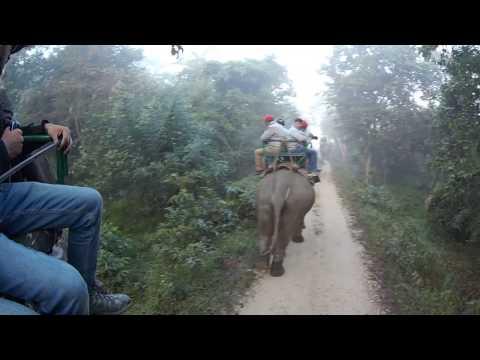 21 Nov 2016 - Rhino spotting in Kaziranga - elephant ride / safari