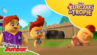🕶️ Superszybko w dół! | Kurczaki na tropie | Disney Junior Polska